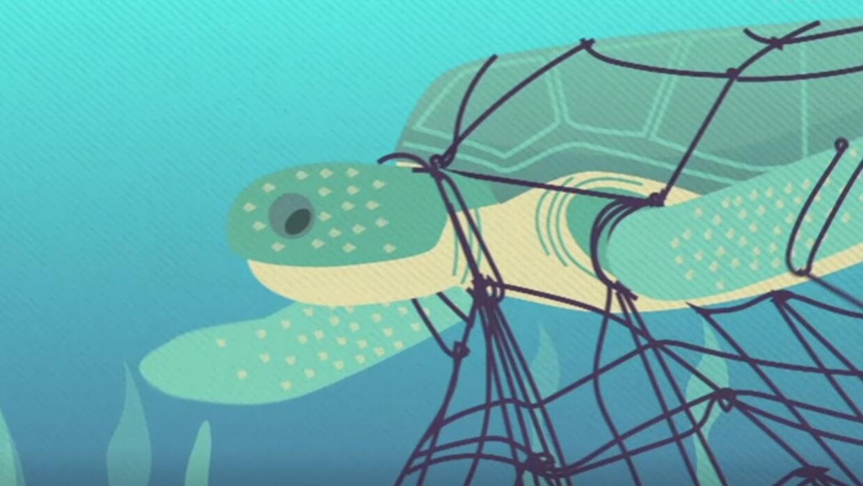 Mapeo de rutas de tráfico ilegal podría salvar a las tortugas marinas de...