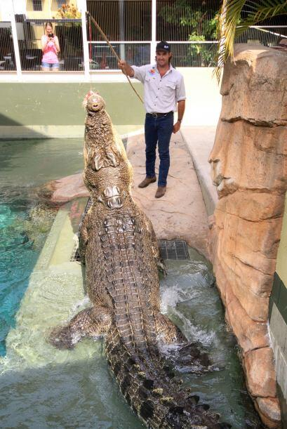 Un portavoz de 'Crocosaurus Cove'  aseguró que la gente experimenta una...