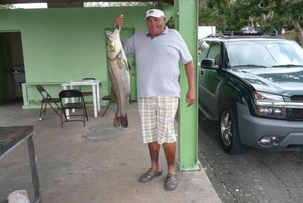 El róbalo es otro pescado muy popular