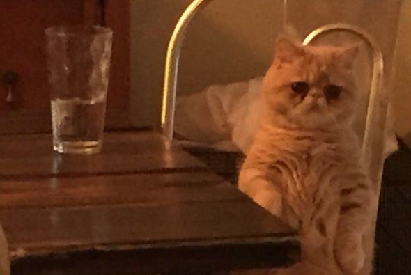 Algunos comparan a este pequeño con el gato amante de la comida: Garfiel...