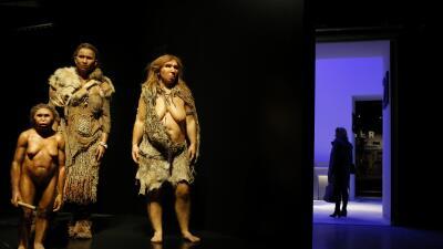 Desde la izquierda, modelos de mujeres Flores (homo floresiensis), Homo...