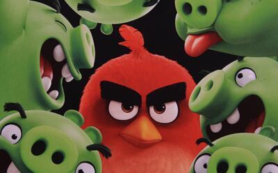 'Angry Birds' celebran Día Nacional del Cerdito