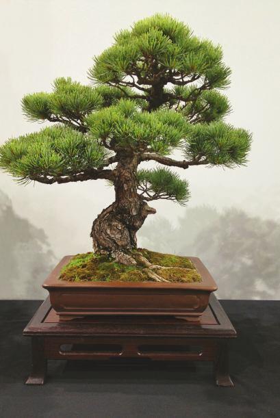 """La versión bonsái de cualquier especie servirá para """"representar"""" grande..."""