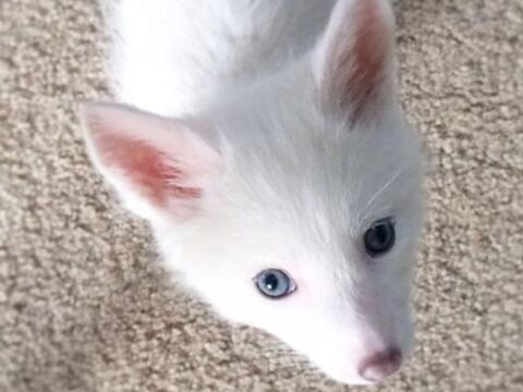 ¿Quién no quisiera una adorable mascota como esta?
