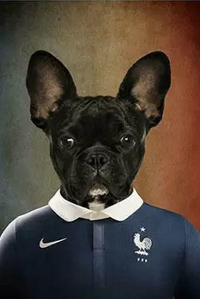 Francia- Bulldog francés     Fuente: lifeonwhite.com