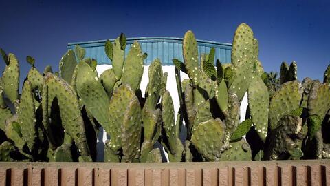 Cómo evitar la contaminación del agua cactus.jpg