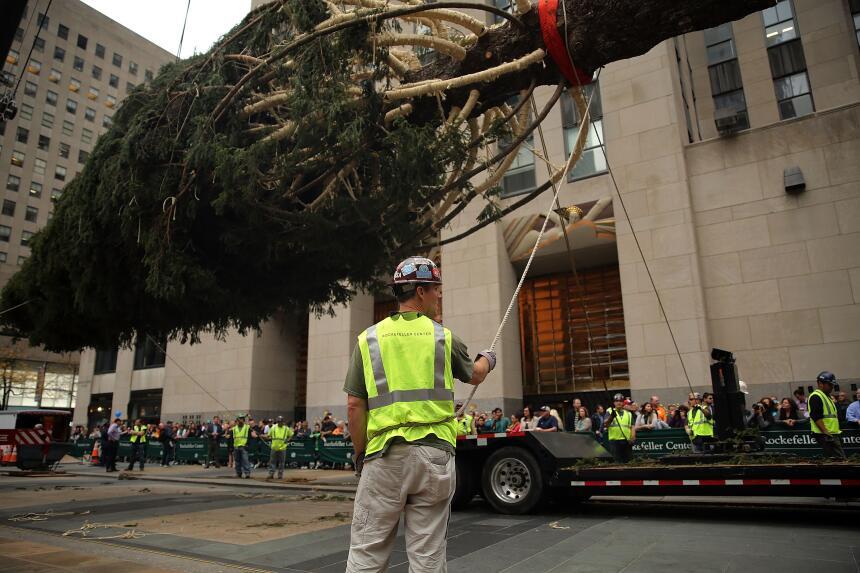 Llegó el emblemático árbol de Navidad al Rockefeller Center