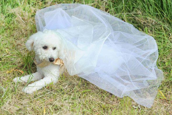 La novia muy cómoda con su vestido.