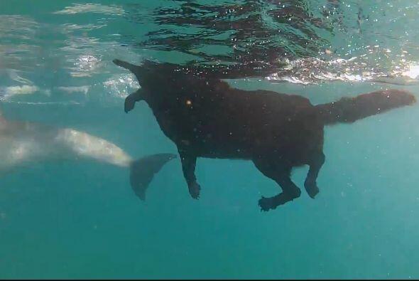 Pero probó que sabe nadar a la perfección y sin ningún temor de convivir...