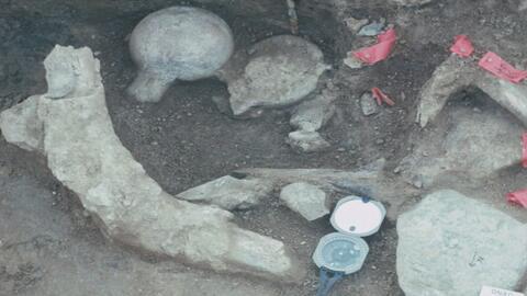 Especie homínida pudo haber vivido en California hace 130,000 años
