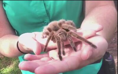 Inauguran una nueva área de insectos del Zoológico de San Antonio