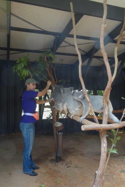 Goska asegura que la pasión por los animales es algo con lo que nació y...