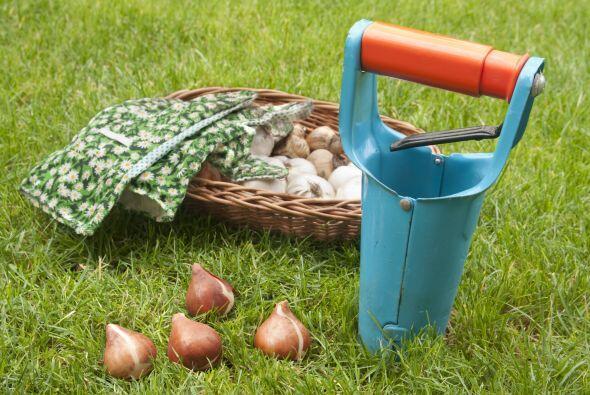 Pensar a futuro. También puedes aprovechar para plantar bulbos de...