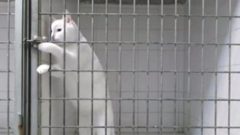 Un gato logra escapar de su jaula, en una clínica de Marsella, abriéndol...