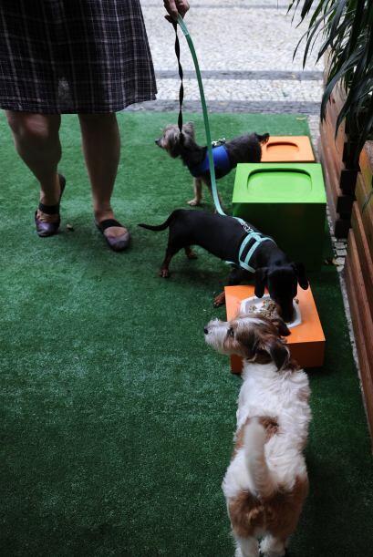Por su parte las mascotas conviven con otras en el área que se encuentra...