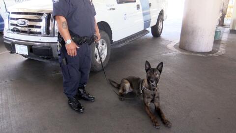 Los perros K9 de la frontera encargados de prevenir la entrada al pa&iac...