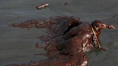 BP corona pozo marino averiado, pero sigue fuga de crudo fc7ab0e82ce043c...