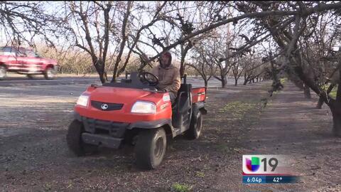 Rancheros extreman cuidados para proteger sus cultivos