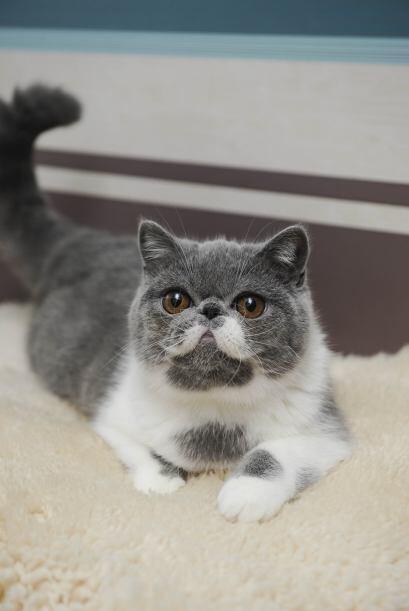 Este gatito no sólo es especial por sus peculiares bigotes, si no que ti...