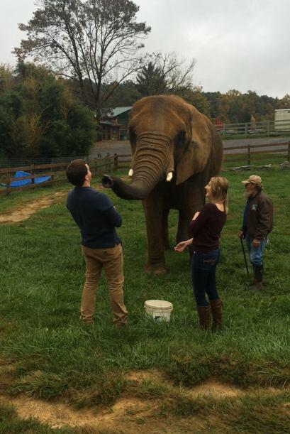 Los dos disfrutaron del momento y Katie quiso jugar un poco con el elefa...