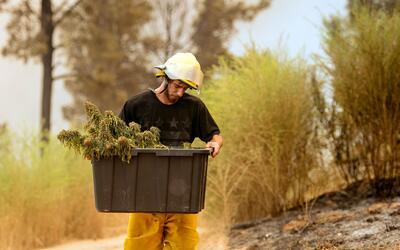 Anthony Lopez recoge lo que queda de una plantación de marihuana en Sant...