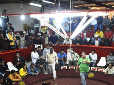 La tradición ecuatoriana de la pelea de gallos reúne el pr...