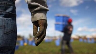 Trabajadores agrícolas.-