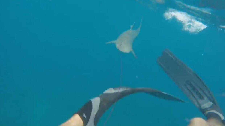 El momento en el que un tiburón muerde a un buzo que pescaba en Key West