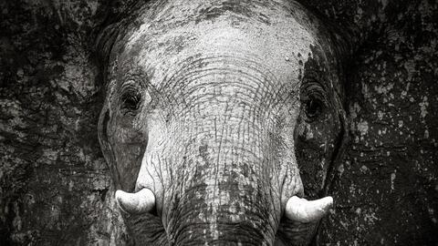 Africa janaina-matarazzo-the-artist.jpg