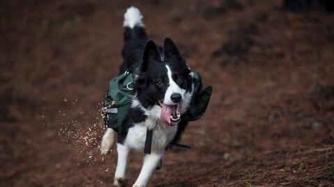 Mónica  Isola Wiesner perra feliz.jpeg