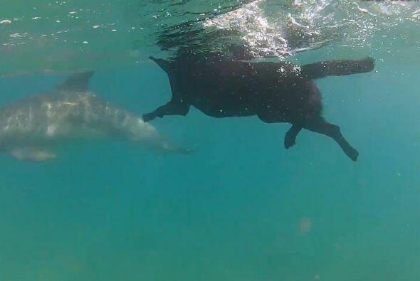 Kira se divirtió persiguiendo a los delfines y nadando con ellos.