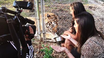 ¿Te atreverías a alimentar a un tigre, un oso o un cocodrilo? Maity Interiano se enfrentó a la vida salvaje