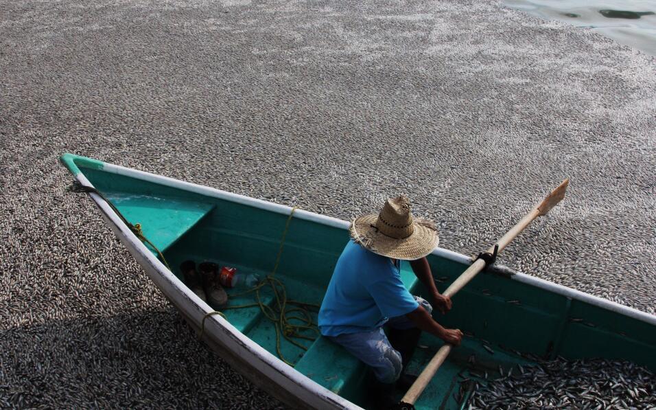 En la laguna de Cajititlán en el estado de Jalisco los pescadores locale...