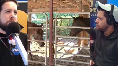 Hombre enmascarado se roba dos caballos en Miami y Los Pichy Boys investigan la razón