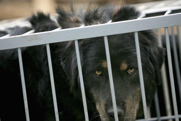 Pasa tiempo con el animal antes de comprarlo o adoptarlo. Ten cuidado cu...