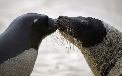 El día de San Valentín no es sólo para humanos! Les...