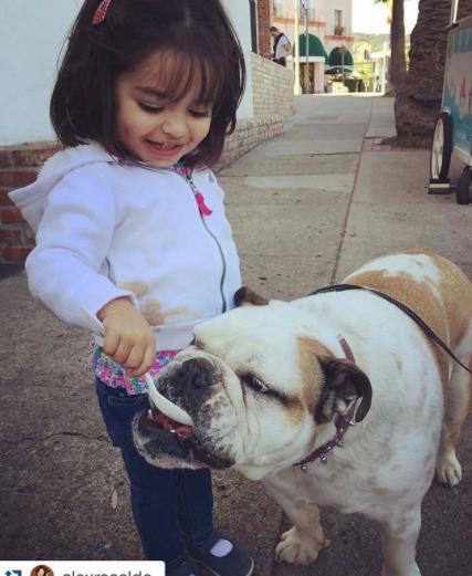 Fiona, la bulldog de Eugenio Derbez