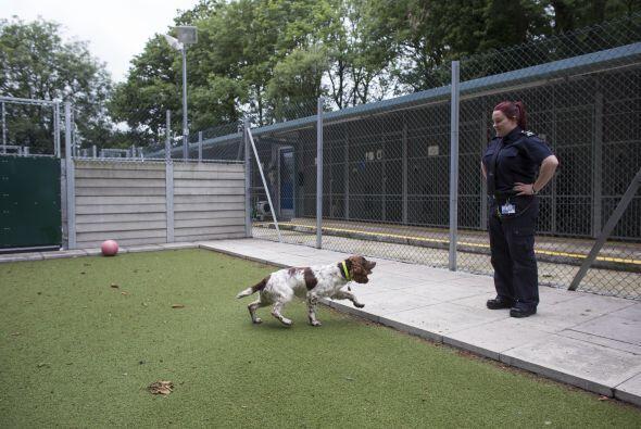 El olfato de los perros está veinte veces más desarrollado que el de los...