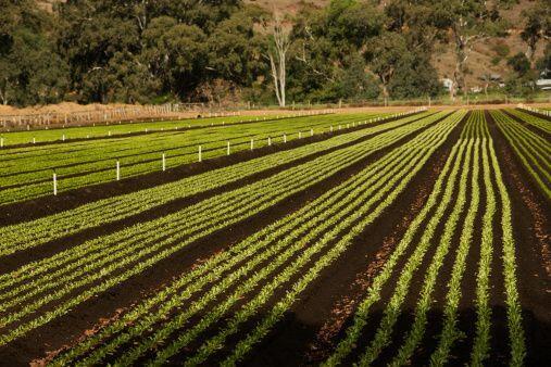 Agricultura- Si importas o transportas animales, productos biológicos, b...