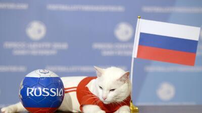 La fauna que desea imitar al adivinador pulpo Paul ahora en Rusia 2018