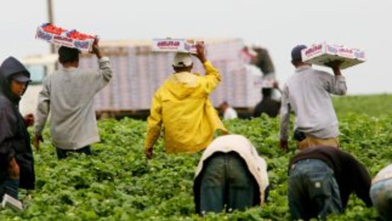 Los trabajadores en un campo agrícola de California.
