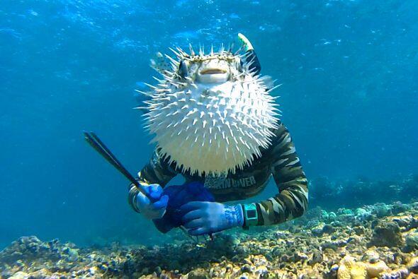Aunque el buzo pretendía inmortalizar su momento al lado de un pez globo...