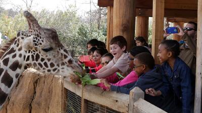 Dan la bienvenida a una jirafa en el zoológico de Dallas