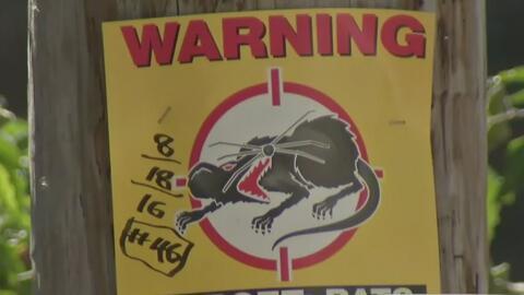 Preocupación en Chicago por el aumento de ratas en las calles de la ciudad