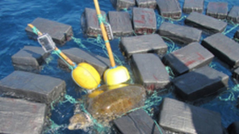 La tortuga fue rescatada por las autoridades costera y la liberaron lueg...