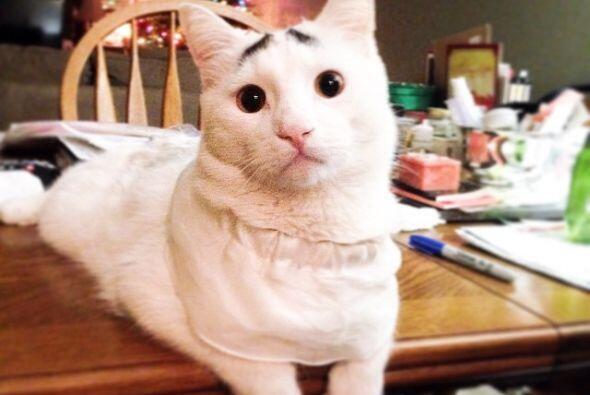 Sam se ha convertido en un gato muy popular. Sus cejas lo hacen parecer...