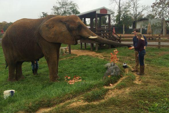 La pareja aprovecho para pasar un rato con el elefante.
