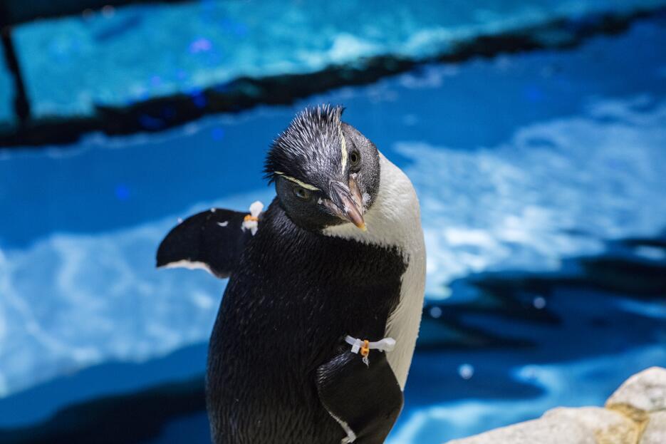 Pingüino número 23