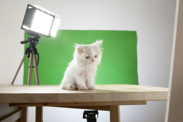 Este gatito es el protagonista de una serie de fotografías surrealistas...