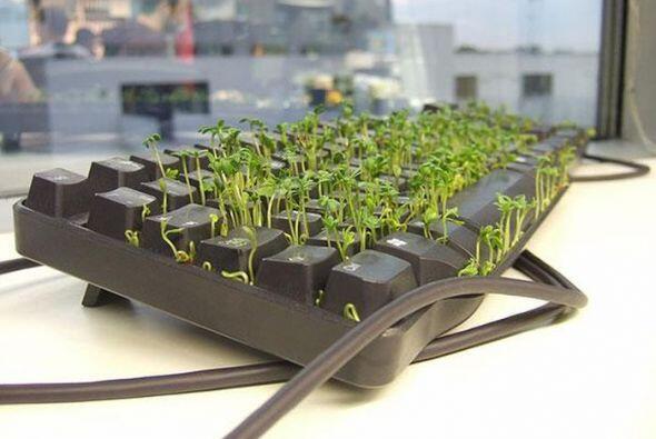 Mira que lindo se ven las plantitas en el keyboard de tu colega! Esta br...